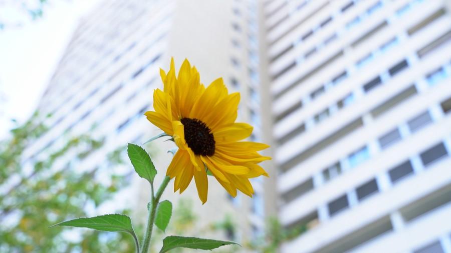 Der Verein Edible Roofs hat einen urbanen Garten auf der Lochergut-Terrasse gepflanzt.