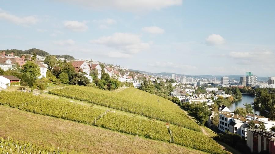 Der Rebberg Chillesteig produziert nebst der schönen Aussicht auch leckeren Wein.