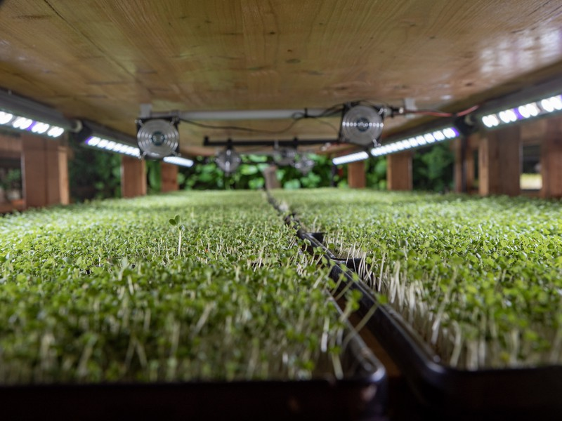 Die vertikale Farm von Yasai ist Teil des Urban Farming Day.